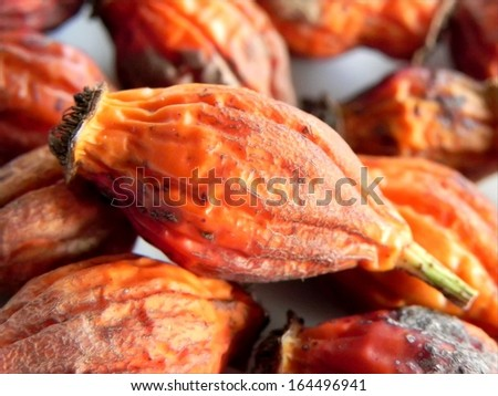 Macro shot of the dried rose hip/Dried rose hip