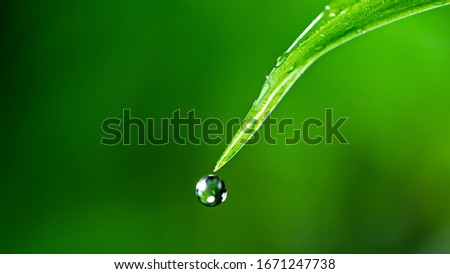 Macro shot of water drop over the green grass leaf , relaxation with water ripple drops concept Foto stock ©