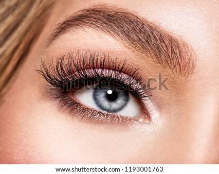 Macro Shot of Young  Woman's Beautiful Eye. Elegance CloseUp of Female Eye with Classic MakeUp. Beauty, Cosmetics and Makeup. Brown Eyeshadow on Eyelid