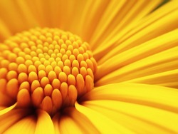 Macro shot yellow flower background
