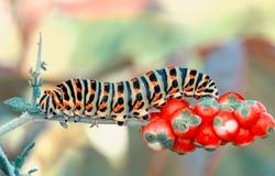 Macro shots, Beautiful nature scene. Close up beautiful caterpillar of butterfly