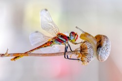 Macro shots, Beautiful nature scene dragonfly and snail