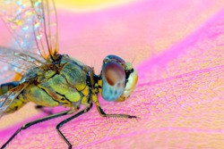 Macro shots, showing of eyes dragonfly and wings detail. Beautiful dragonfly in the nature habitat.