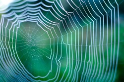 macro spider web in the dew close up. blurred background. soft focus