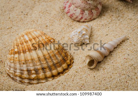 Macro studio shot of beautiful sea shell on a yellow sand.