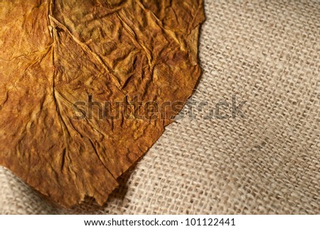Macro tobacco leaf closeup thin focus on a collection bag