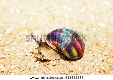 Macro view of color snail on sand