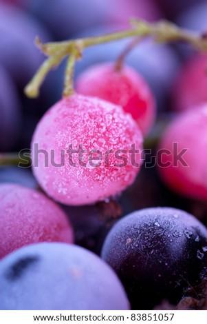 Macro view of frozen berries: blackcurrant, redcurrant, blueberry