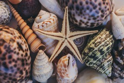 Macro view of seashells and starfish, many different seashells as texture and background for designers.