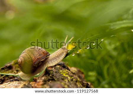 Macro view of snail and water drops after rain.