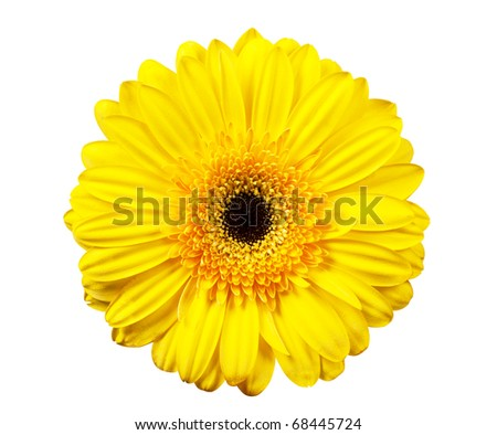 Macro view of yellow flower isolated on the white background #68445724