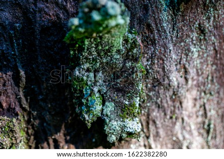 macro wild of wooden textured background with damages and moss