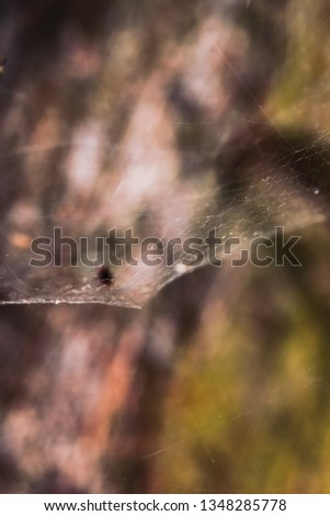 Macro World of Mother Nature - Cobweb  #1348285778