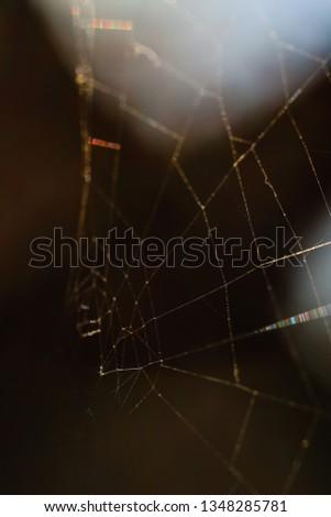 Macro World of Mother Nature - Cobweb  #1348285781