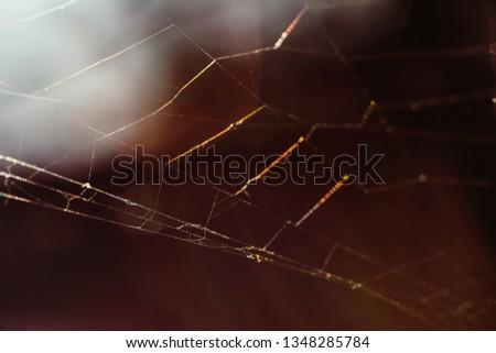 Macro World of Mother Nature - Cobweb  #1348285784