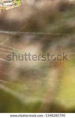 Macro World of Mother Nature - Cobweb  #1348285790