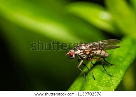 Macrophotography - A blowfly in close up view. Fine details visible. #1139702576