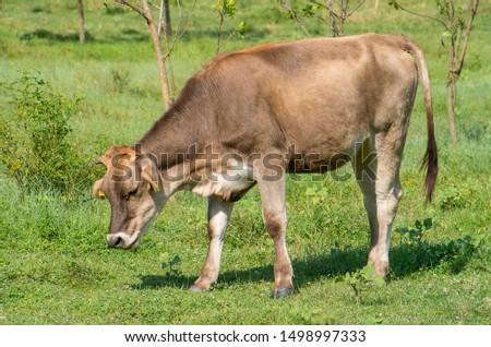 mad cow disease. Bovine spongiform encephalopathy BSE ストックフォト ©