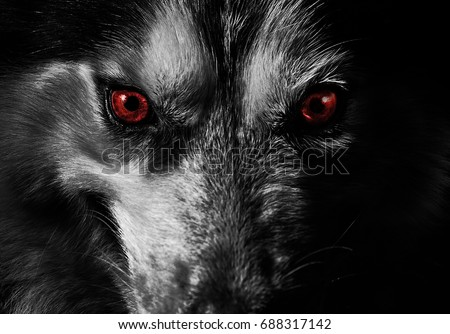 mad dog look at you  #688317142