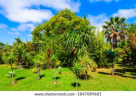 Madeira Botanical Garden or Jardim Botanico in Funchal city, Madeira Foto stock ©