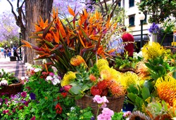 Madeira Flower Festival. Flower bouquets and compositions adorn the streets and squares of the Capital - Funchal. Portugal