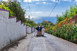 Madeira, Funchal Carreiros do Monte. Basket sledge in Madeira with a view. Cable car with ocean view.
