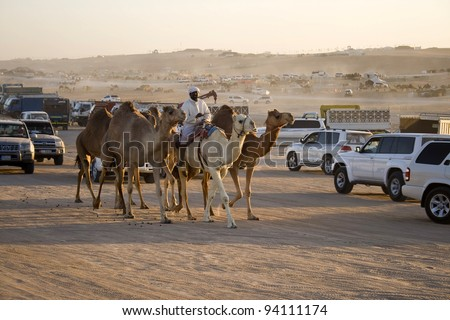 MADINAT ZAYED, WESTERN REGION, UAE - DECEMBER 23: Group of camels between the cars at Al Dhafrah Camel Festival on December 23, 2011 in Madinat Zayed, Western Region, the United Arab Emirates.