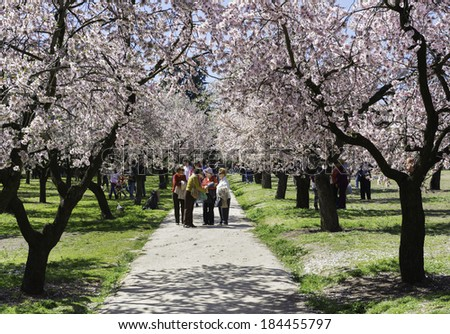 MADRID - MARCH 16: Locals and tourists enjoy a sunny day under almond trees with early blossoms in spring in a park in Madrid, Spain, on March 16, 2014.