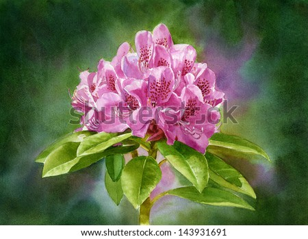 Magenta Rhododendron Dark Background.  Watercolor painting of a magenta colored  rhododendron blossom with a wet in wet background of dark pigments.