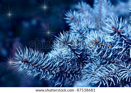 Magic branches of blue spruces at night