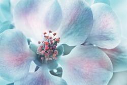 Magic Chaenomeles japonica  flower