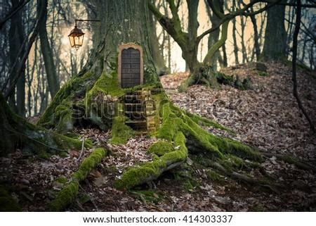 magic fairy forest