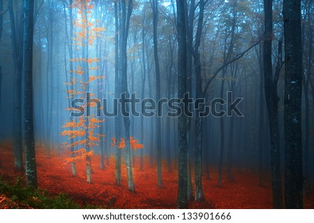 Magic forest in a foggy day during autumn