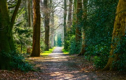 Magic forest road way. Gren forrest path natural ground wallpaper