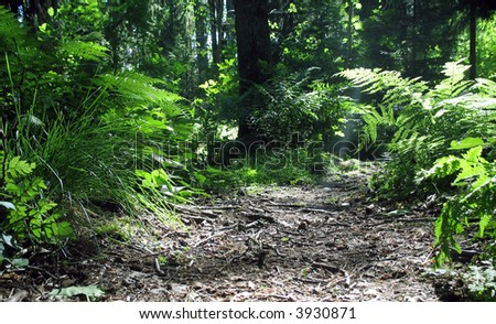 Magic forest with ferns and other vegetation.