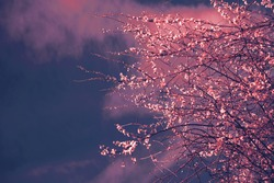 Magic garden background with blossoming tree. Moody fantasy morning sunrise dreamy landscape.