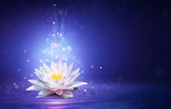 Magic Lotus Flower With Fairy Light - Miracle and Mystery Concept