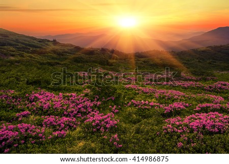 Magic pink rhododendron spring  flowers in the Carpathian mountains,  colorful spring picture, west Ukraine, east Europe. - Shutterstock ID 414986875