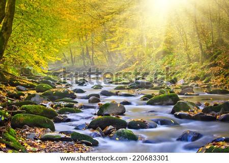 Magic river in forest, autumn landscape.
