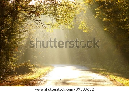 Magic sunlight backlit autumn leaves of trees and falls on the forest road.