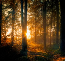 magic sunlight comes in to  the forest