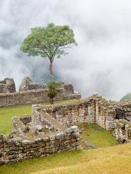 Magic tree in Machu Picchu