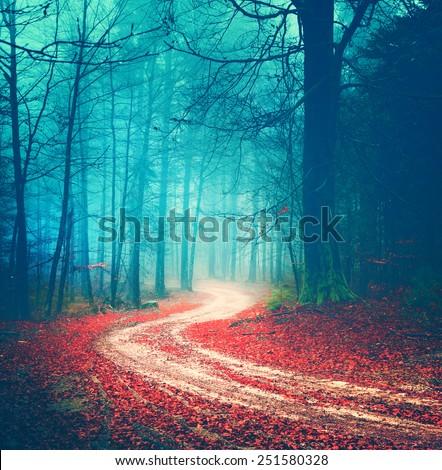 Magic vintage color autumn forest road.