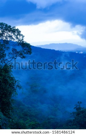 Magical aerial view of tropical rainforest in the morning misty, gently blue fog covered ancient forest and blue mountains. Khao Yai National Park, Thailand, UNESCO World Heritage Site. Soft focus. stock photo