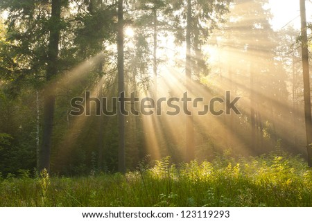 Magical dawn in forest.