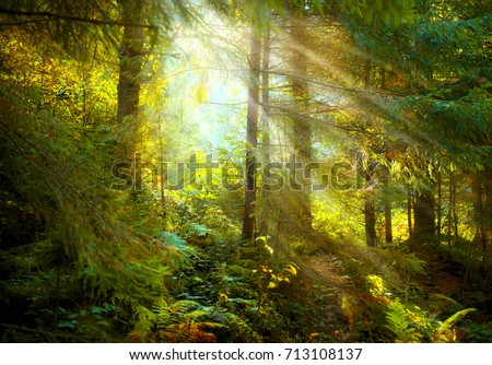 Magical Deep foggy Autumn Forest. Park. Beautiful Scene Misty Old Forest with Sun Rays, Shadows and Fog. Scenic Landscape
