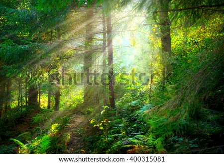 Magical Deep foggy Forest. Park. Beautiful Scene Misty Old Forest with Sun Rays, Shadows and Fog
