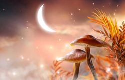 Magical fantasy mushrooms valley in enchanted fairy tale palm tree thickets and glowing crescent moon, fabulous mystical garden on mysterious cloudy sky background with shining stars in night