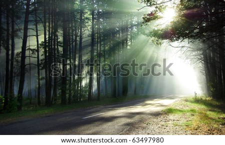 Magical forest in the morning sunlight rays. Bright rays of sunlight on the forest road. Slanting solar light through trees in the wood. Morning sun shining through the branches on the country road.
