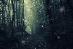 magical forest path, mysterious halloween landscape